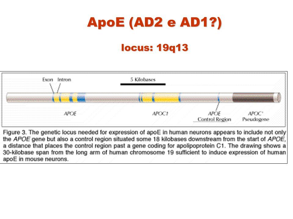 ApoE (AD2 e AD1?) locus: 19q13