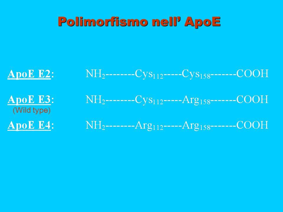 Polimorfismo nell' ApoE (Wild type)