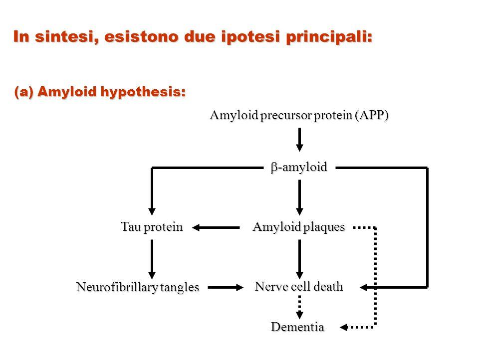 In sintesi, esistono due ipotesi principali: (a) Amyloid hypothesis: Amyloid precursor protein (APP)  -amyloid Amyloid plaques Nerve cell death Demen