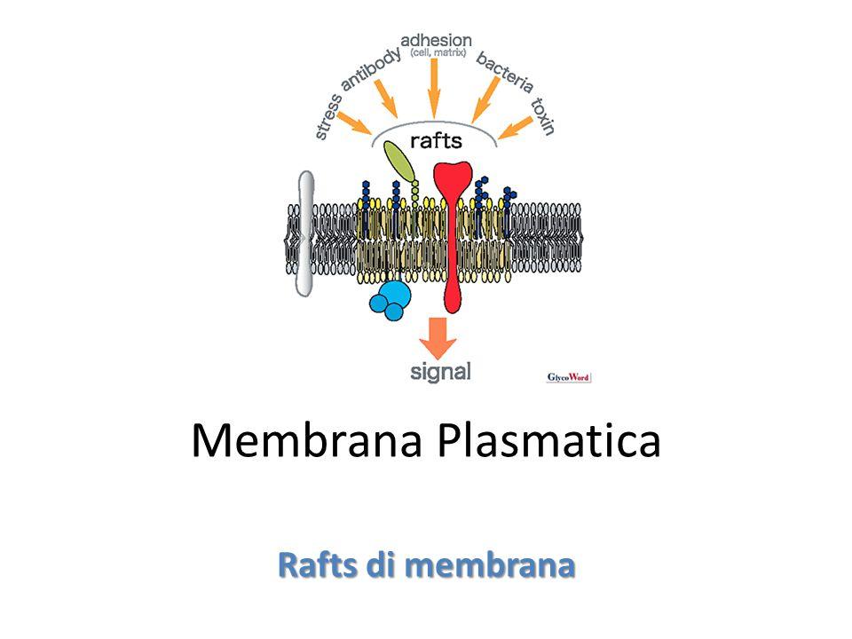 Membrana Plasmatica Rafts di membrana