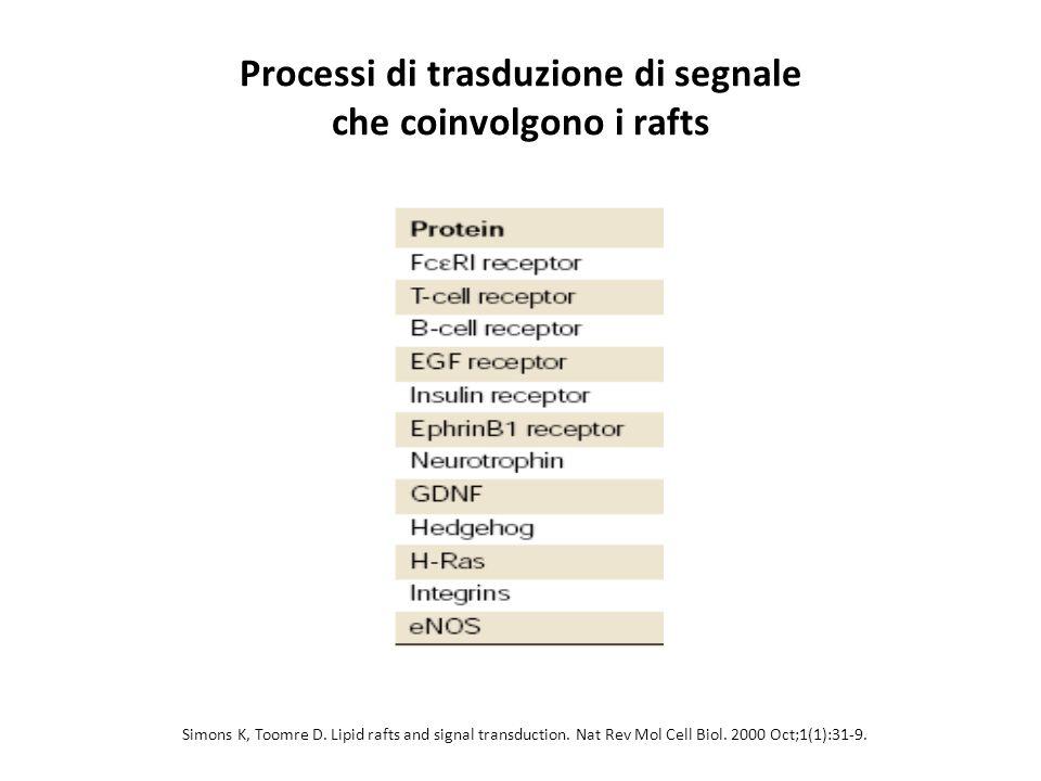 Processi di trasduzione di segnale che coinvolgono i rafts Simons K, Toomre D. Lipid rafts and signal transduction. Nat Rev Mol Cell Biol. 2000 Oct;1(