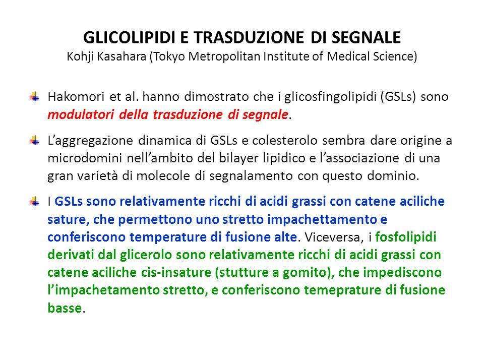 GLICOLIPIDI E TRASDUZIONE DI SEGNALE Kohji Kasahara (Tokyo Metropolitan Institute of Medical Science) Hakomori et al. hanno dimostrato che i glicosfin