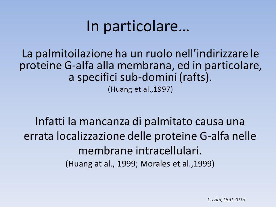 In particolare… La palmitoilazione ha un ruolo nell'indirizzare le proteine G-alfa alla membrana, ed in particolare, a specifici sub-domini (rafts). (