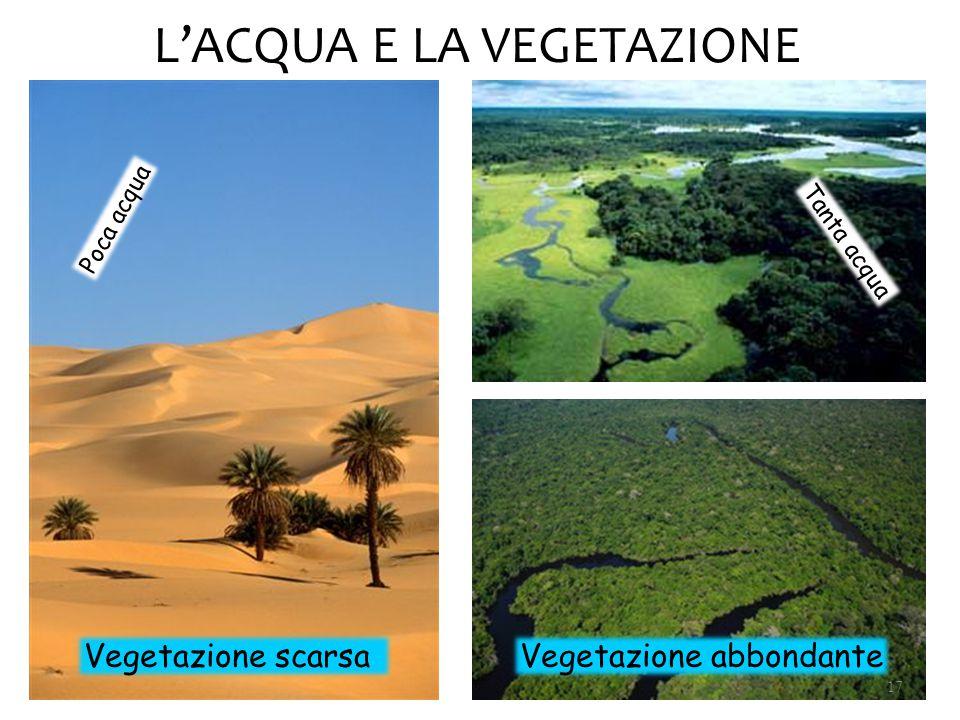 L'ACQUA E LA VEGETAZIONE Tanta acqua Poca acqua Vegetazione scarsaVegetazione abbondante 17