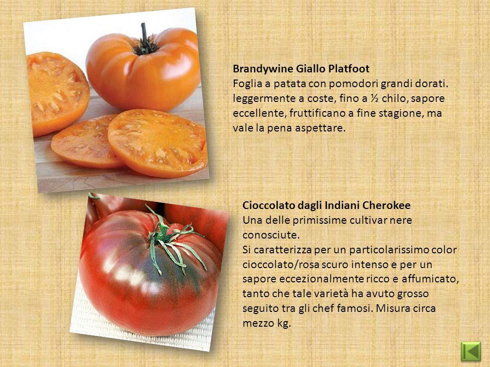 Brandywine Giallo Platfoot Foglia a patata con pomodori grandi dorati. leggermente a coste, fino a ½ chilo, sapore eccellente, fruttificano a fine sta