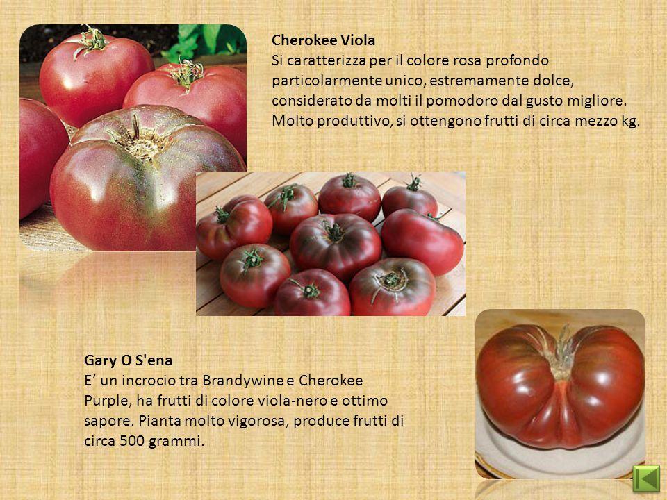 Cherokee Viola Si caratterizza per il colore rosa profondo particolarmente unico, estremamente dolce, considerato da molti il pomodoro dal gusto migli