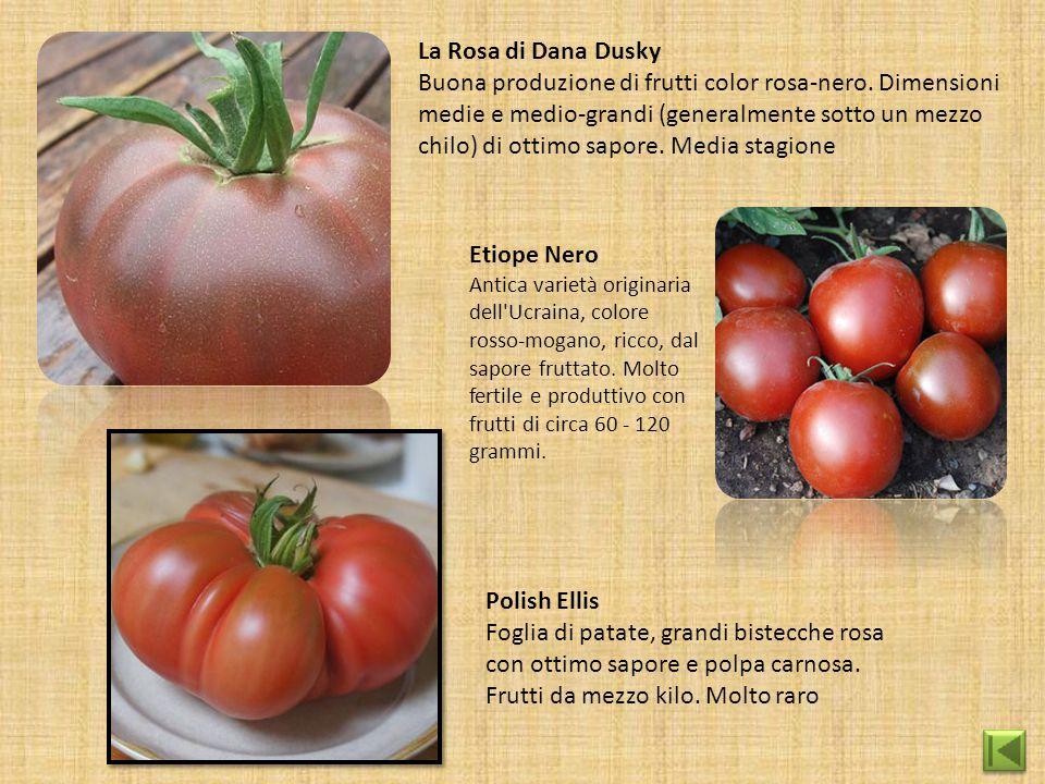 La Rosa di Dana Dusky Buona produzione di frutti color rosa-nero. Dimensioni medie e medio-grandi (generalmente sotto un mezzo chilo) di ottimo sapore