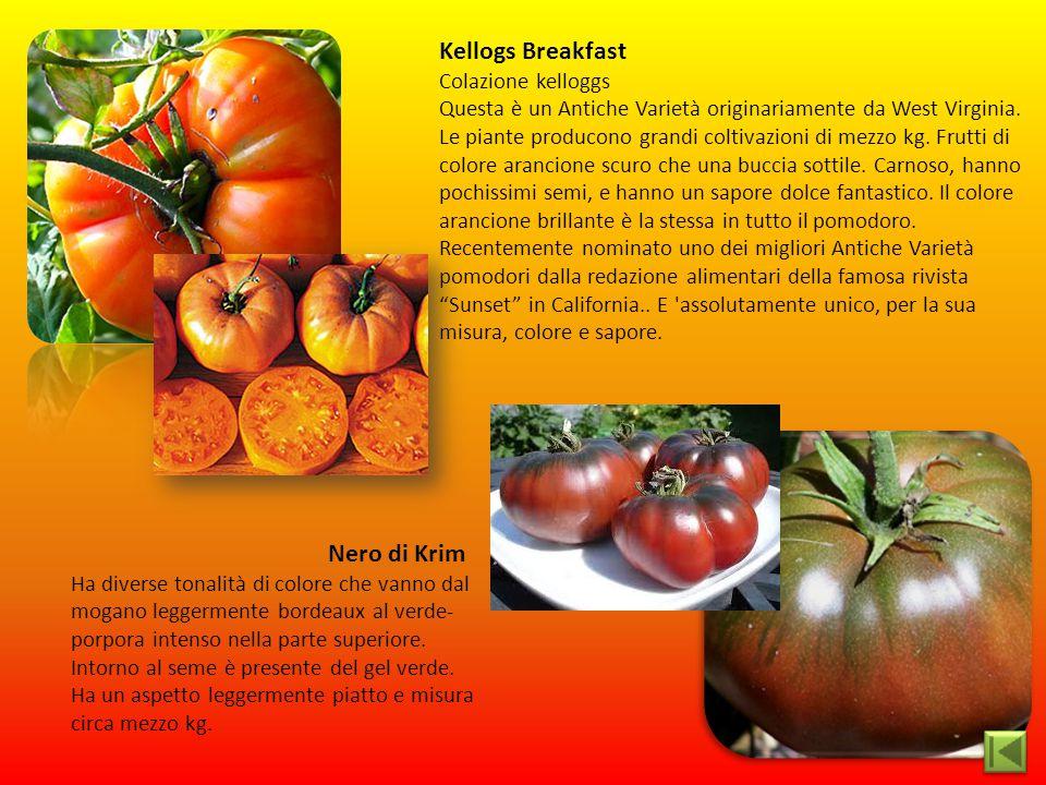 Kellogs Breakfast Colazione kelloggs Questa è un Antiche Varietà originariamente da West Virginia. Le piante producono grandi coltivazioni di mezzo kg
