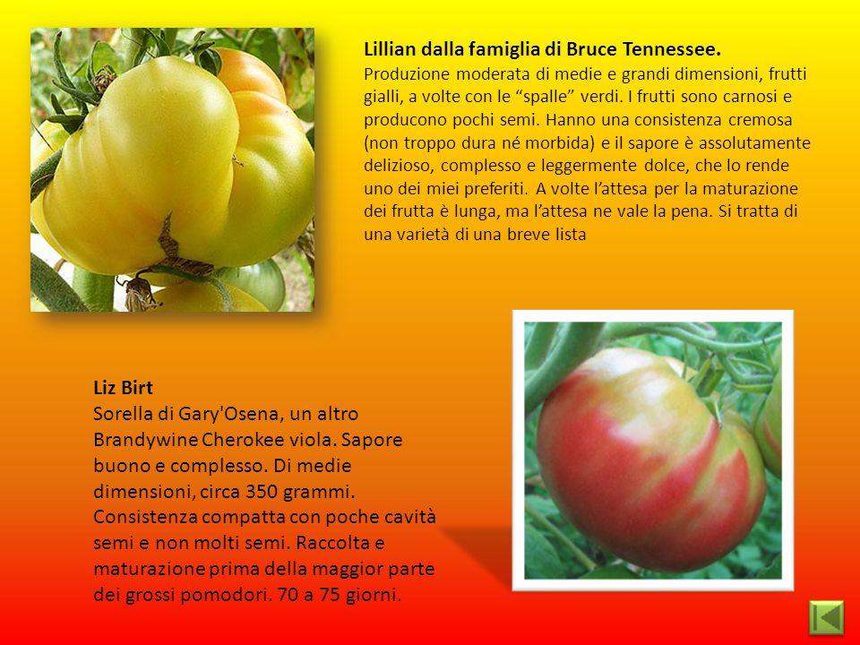 """Lillian dalla famiglia di Bruce Tennessee. Produzione moderata di medie e grandi dimensioni, frutti gialli, a volte con le """"spalle"""" verdi. I frutti so"""
