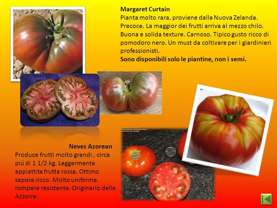 Neves Azorean Produce frutti molto grandi, circa piú di 1 1/2 kg. Leggermente appiattita frutta rossa. Ottimo sapore ricco. Molto uniforme. rompere re