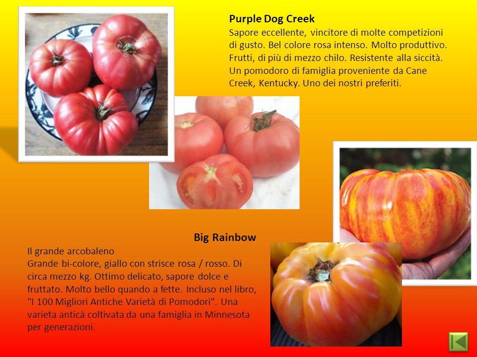 Purple Dog Creek Sapore eccellente, vincitore di molte competizioni di gusto. Bel colore rosa intenso. Molto produttivo. Frutti, di più di mezzo chilo