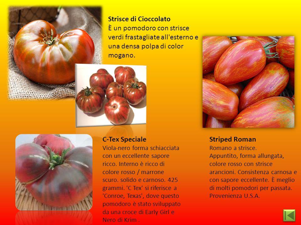 Striped Roman Romano a strisce. Appuntito, forma allungata, colore rosso con strisce arancioni. Consistenza carnosa e con sapore eccellente. È meglio