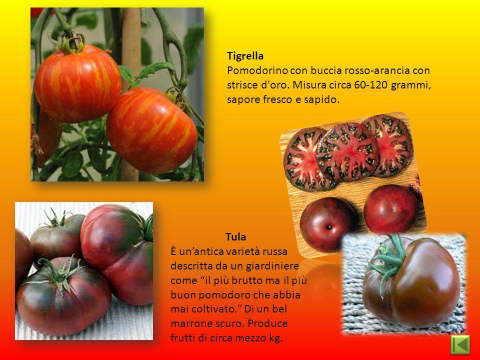 Tigrella Pomodorino con buccia rosso-arancia con strisce d'oro. Misura circa 60-120 grammi, sapore fresco e sapido. Tula È un'antica varietà russa des