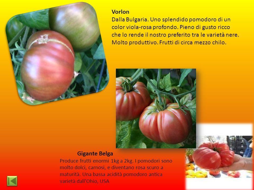 Vorlon Dalla Bulgaria. Uno splendido pomodoro di un color viola-rosa profondo. Pieno di gusto ricco che lo rende il nostro preferito tra le varietà ne
