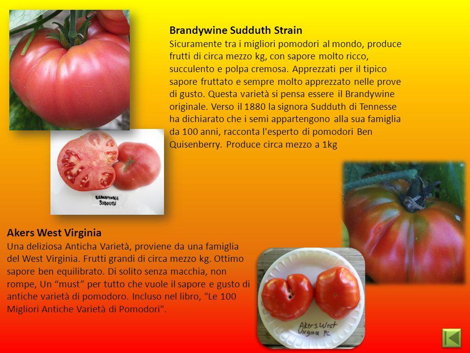 Akers West Virginia Una deliziosa Anticha Varietà, proviene da una famiglia del West Virginia. Frutti grandi di circa mezzo kg. Ottimo sapore ben equi