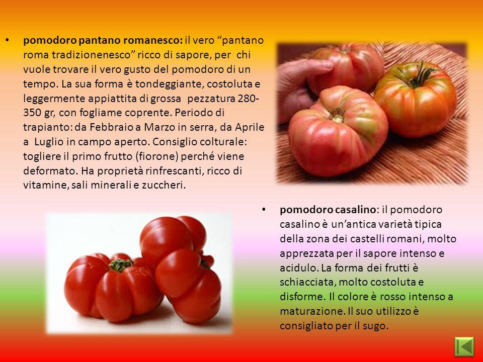 """pomodoro pantano romanesco: il vero """"pantano roma tradizionenesco"""" ricco di sapore, per chi vuole trovare il vero gusto del pomodoro di un tempo. La s"""