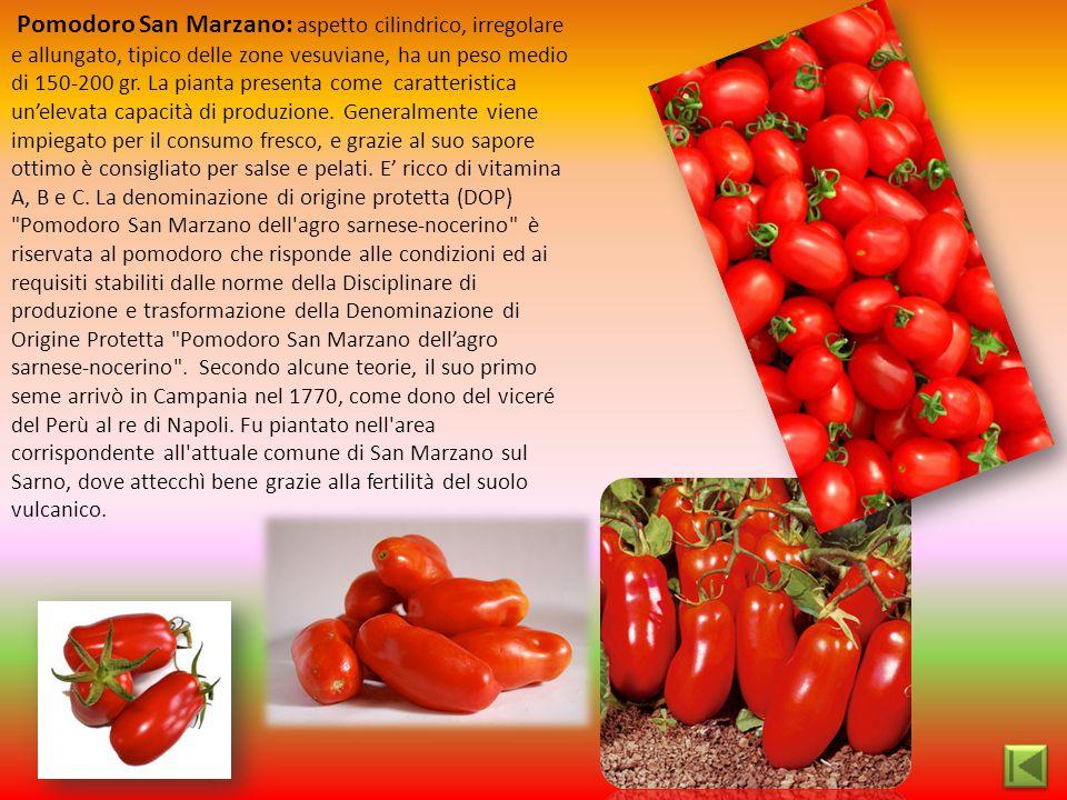 Pomodoro San Marzano: aspetto cilindrico, irregolare e allungato, tipico delle zone vesuviane, ha un peso medio di 150-200 gr. La pianta presenta come