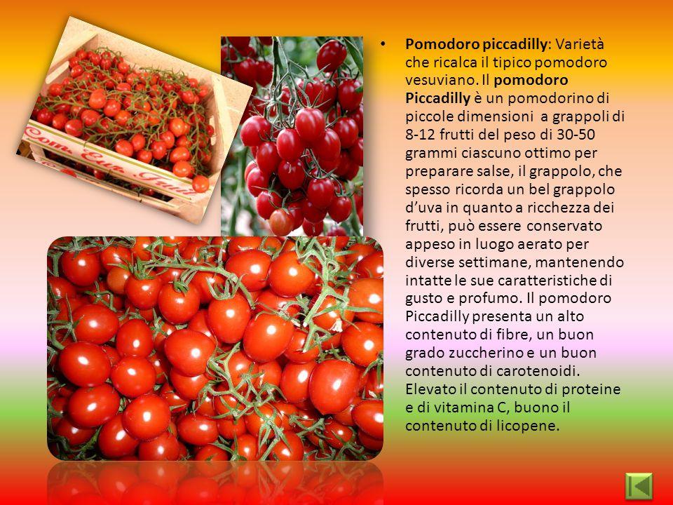 Pomodoro piccadilly: Varietà che ricalca il tipico pomodoro vesuviano. Il pomodoro Piccadilly è un pomodorino di piccole dimensioni a grappoli di 8-12