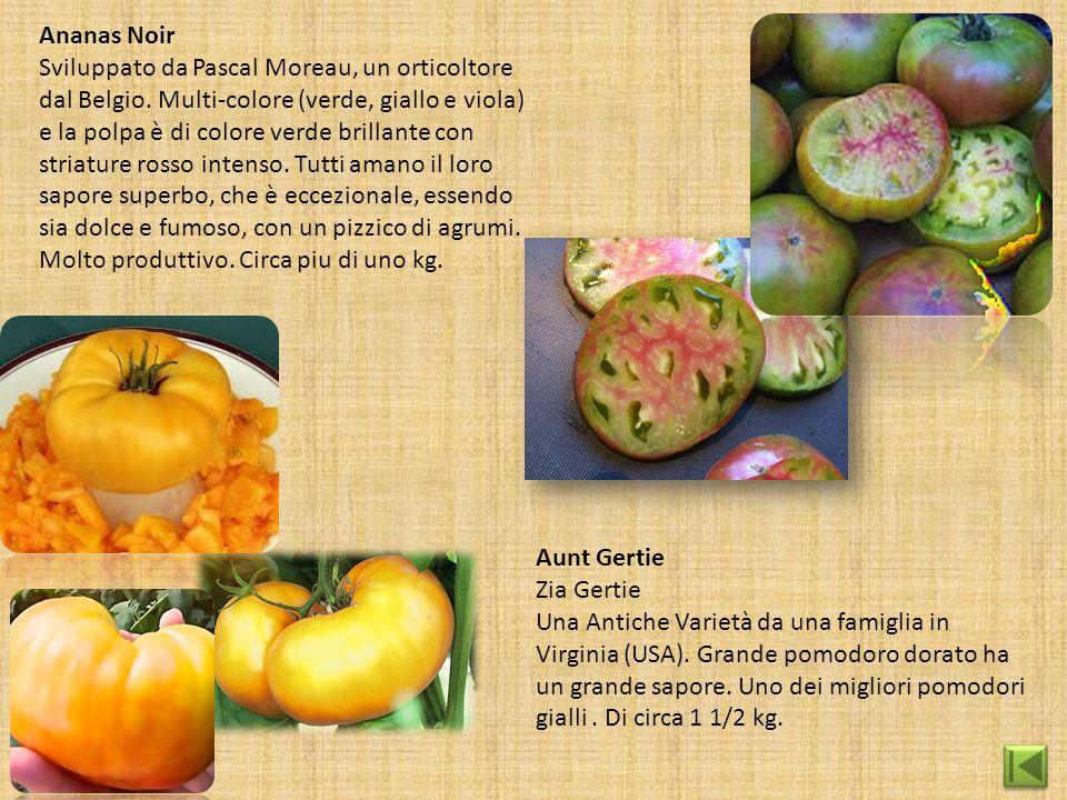 Ananas Noir Sviluppato da Pascal Moreau, un orticoltore dal Belgio. Multi-colore (verde, giallo e viola) e la polpa è di colore verde brillante con st