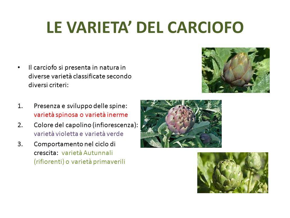 LE VARIETA' DEL CARCIOFO Il carciofo si presenta in natura in diverse varietà classificate secondo diversi criteri: 1.Presenza e sviluppo delle spine: