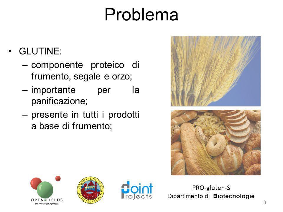 Il frumento fa parte della dieta giornaliera di gran parte della popolazione mondiale; E' stato migliorato per aumentare il contenuto di glutine e potenziandone le proprietà tecnologiche per la produzione di pane, pasta… Problema PRO-gluten-S Dipartimento di Biotecnologie 4 -T.