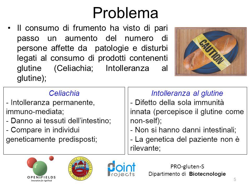 Il consumo di frumento ha visto di pari passo un aumento del numero di persone affette da patologie e disturbi legati al consumo di prodotti contenent