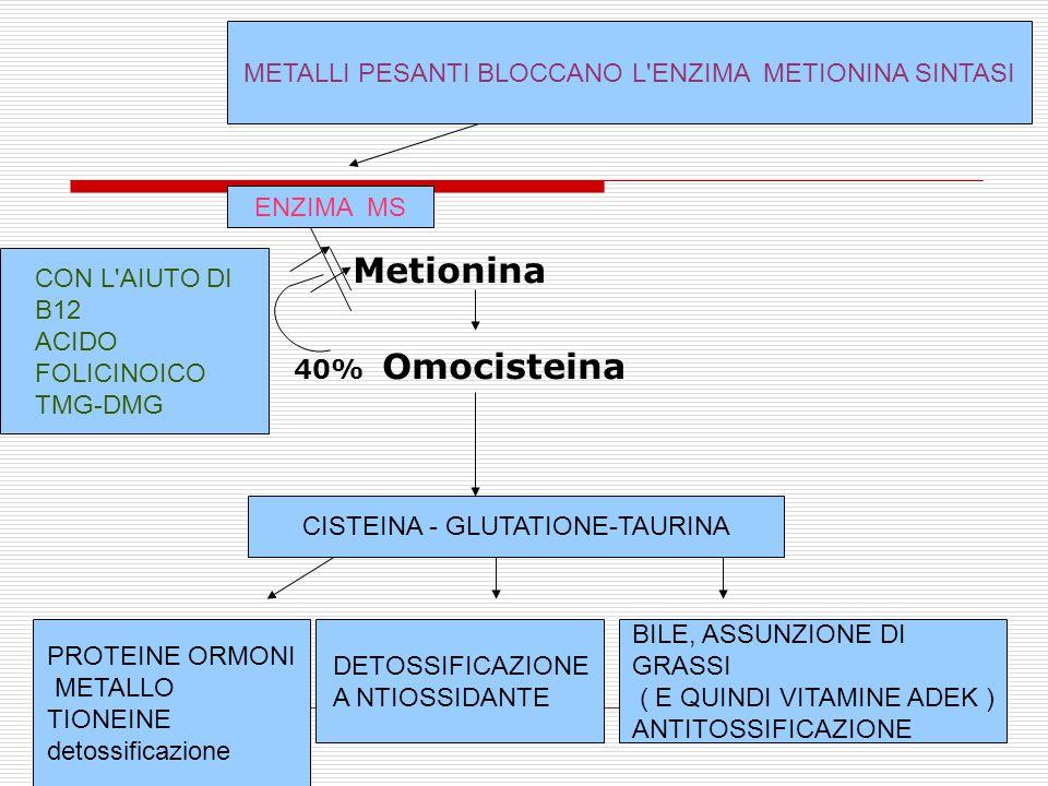 Metionina 40% Omocisteina CISTEINA - GLUTATIONE-TAURINA PROTEINE ORMONI METALLO TIONEINE detossificazione DETOSSIFICAZIONE A NTIOSSIDANTE BILE, ASSUNZIONE DI GRASSI ( E QUINDI VITAMINE ADEK ) ANTITOSSIFICAZIONE ENZIMA MS METALLI PESANTI BLOCCANO L ENZIMA METIONINA SINTASI CON L AIUTO DI B12 ACIDO FOLICINOICO TMG-DMG