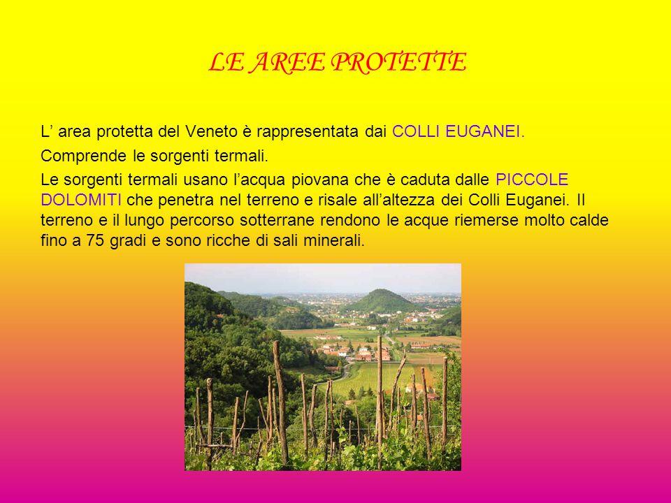 LE AREE PROTETTE L' area protetta del Veneto è rappresentata dai COLLI EUGANEI.