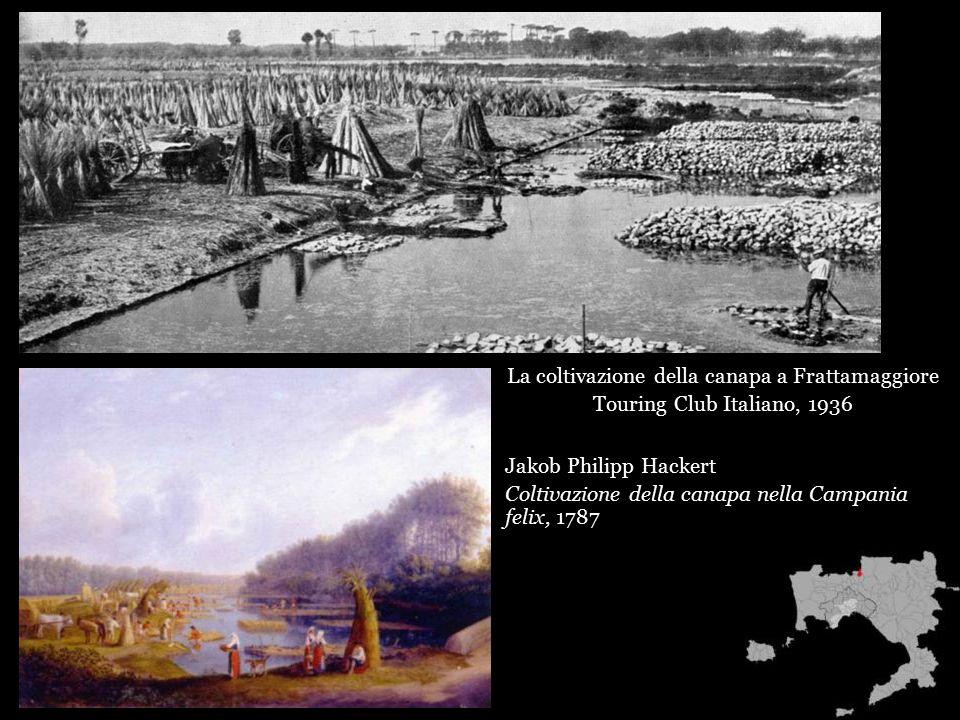 Jakob Philipp Hackert Coltivazione della canapa nella Campania felix, 1787 La coltivazione della canapa a Frattamaggiore Touring Club Italiano, 1936