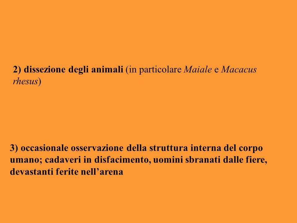 2) dissezione degli animali (in particolare Maiale e Macacus rhesus) 3) occasionale osservazione della struttura interna del corpo umano; cadaveri in