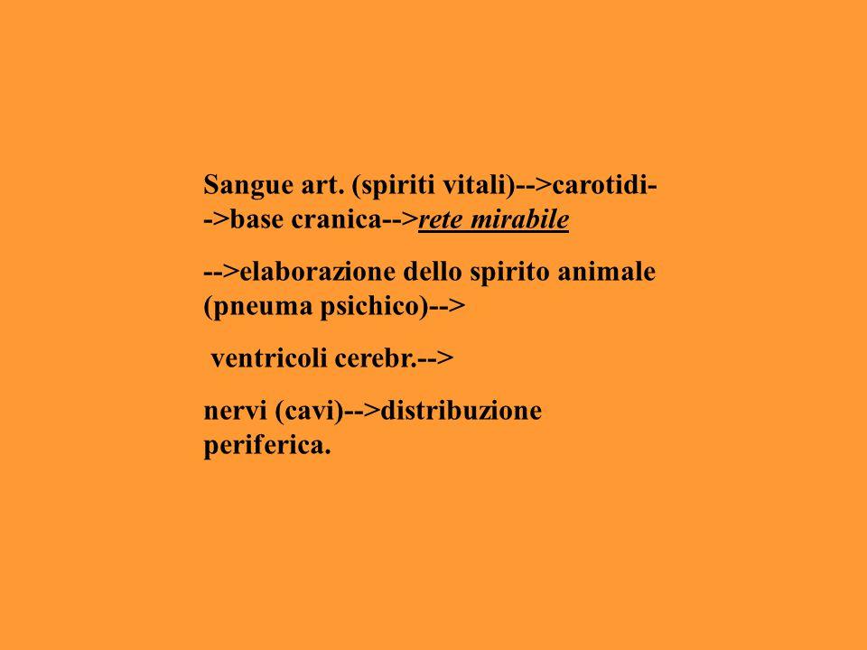 Sangue art. (spiriti vitali)-->carotidi- ->base cranica-->rete mirabile -->elaborazione dello spirito animale (pneuma psichico)--> ventricoli cerebr.-