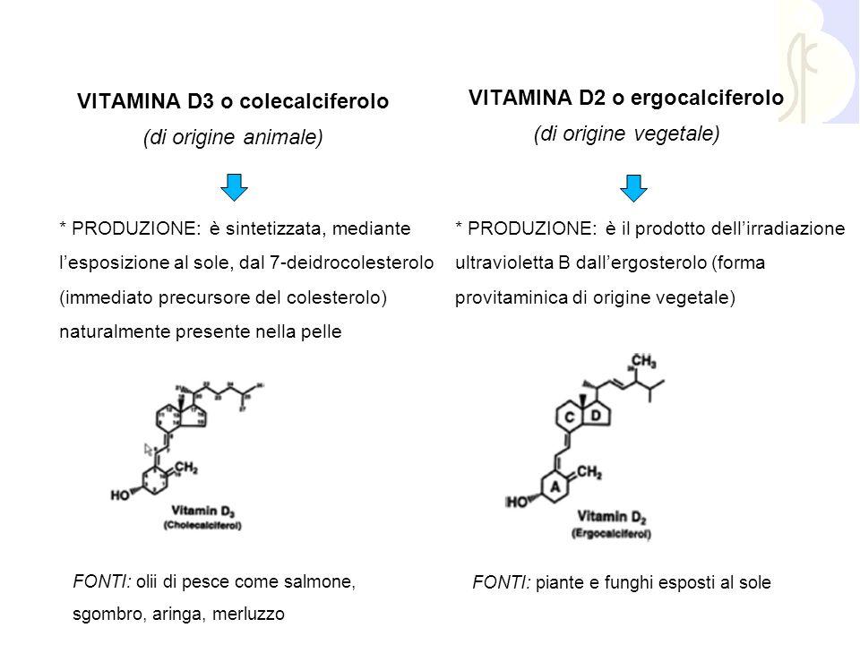 VITAMINA D3 o colecalciferolo (di origine animale) * PRODUZIONE: è sintetizzata, mediante l'esposizione al sole, dal 7-deidrocolesterolo (immediato pr