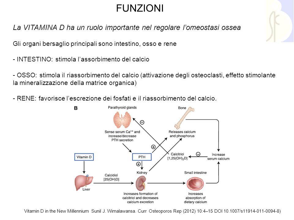 FUNZIONI La VITAMINA D ha un ruolo importante nel regolare l'omeostasi ossea Gli organi bersaglio principali sono intestino, osso e rene - INTESTINO: