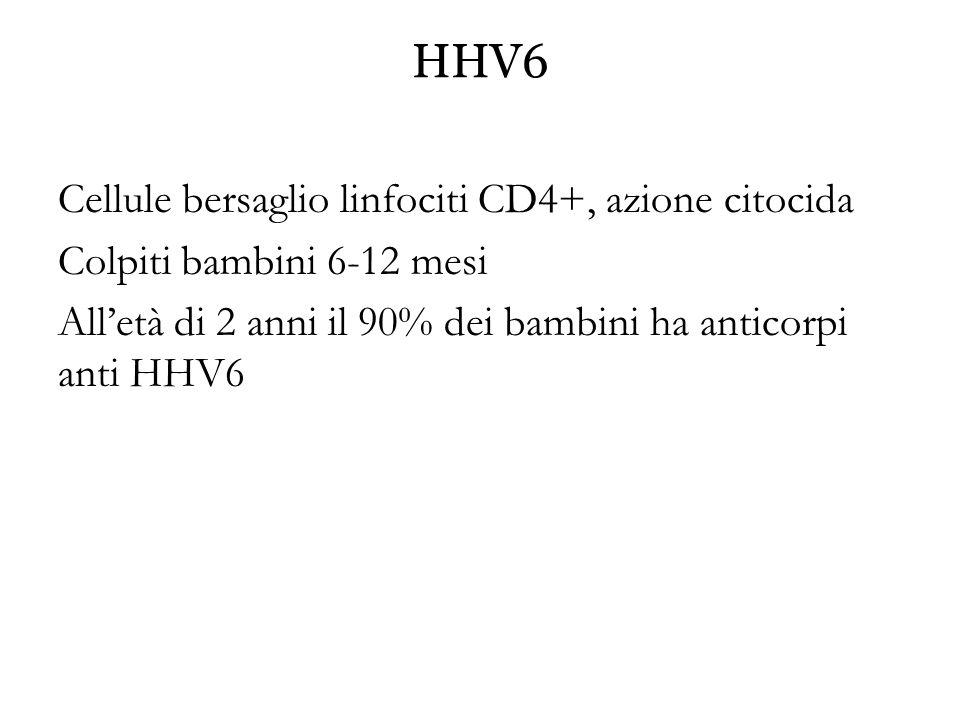 HHV6 Cellule bersaglio linfociti CD4+, azione citocida Colpiti bambini 6-12 mesi All'età di 2 anni il 90% dei bambini ha anticorpi anti HHV6
