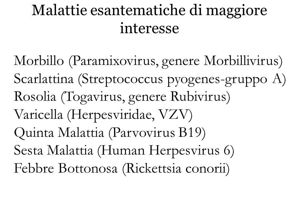 Morbillo (Paramixovirus, genere Morbillivirus) Scarlattina (Streptococcus pyogenes-gruppo A) Rosolia (Togavirus, genere Rubivirus) Varicella (Herpesvi