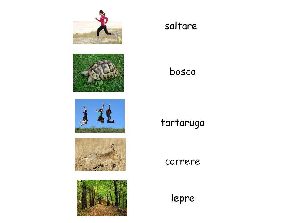 saltare bosco lepre correre tartaruga