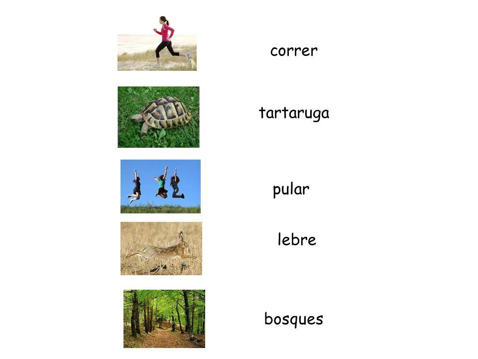 pular bosques lebre correr tartaruga