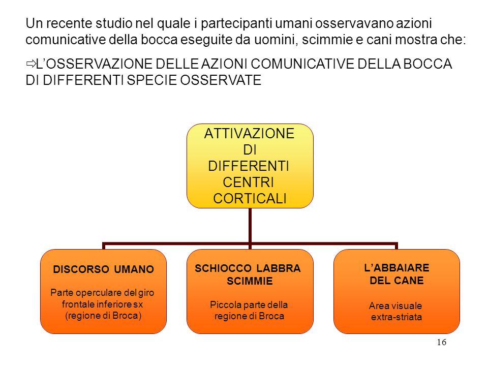 16 ATTIVAZIONE DI DIFFERENTI CENTRI CORTICALI DISCORSO UMANO Parte operculare del giro frontale inferiore sx (regione di Broca) SCHIOCCO LABBRA SCIMMI