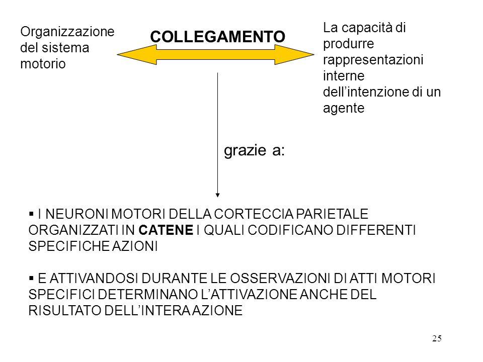 25 La capacità di produrre rappresentazioni interne dell'intenzione di un agente Organizzazione del sistema motorio grazie a:  I NEURONI MOTORI DELLA