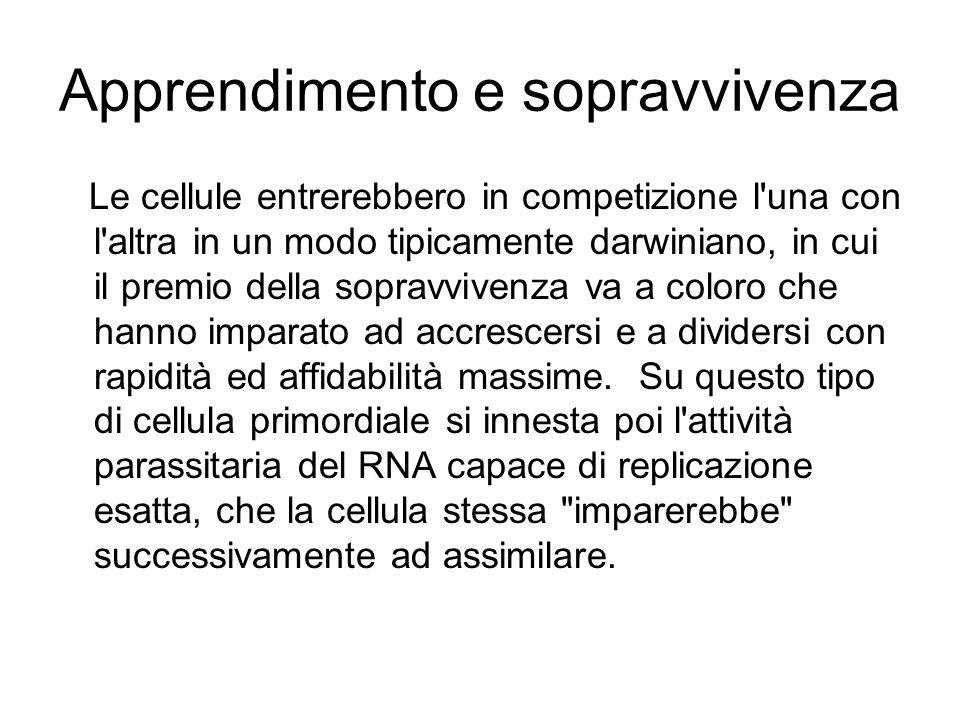 Apprendimento e sopravvivenza Le cellule entrerebbero in competizione l'una con l'altra in un modo tipicamente darwiniano, in cui il premio della sopr