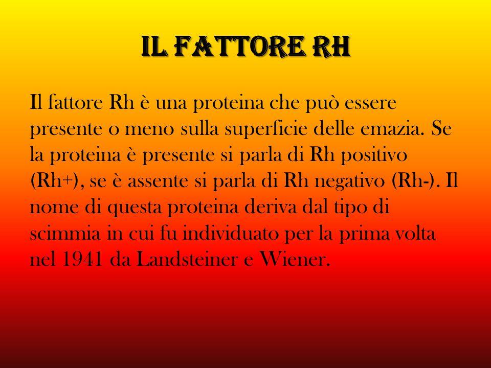 IL FATTORE Rh Il fattore Rh è una proteina che può essere presente o meno sulla superficie delle emazia. Se la proteina è presente si parla di Rh posi