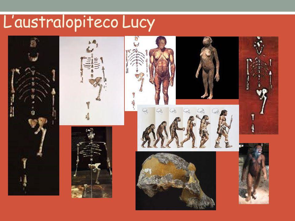 L'australopiteco Lucy