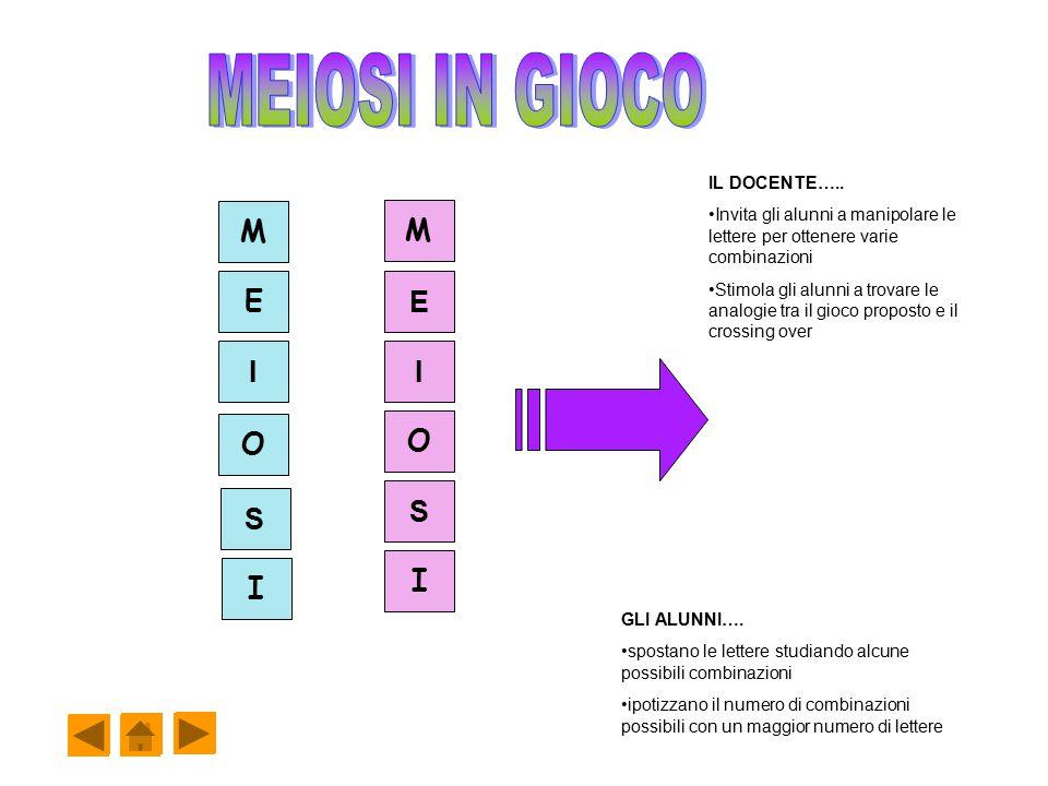 I I S O I E M S M E I O GLI ALUNNI…. spostano le lettere studiando alcune possibili combinazioni ipotizzano il numero di combinazioni possibili con un