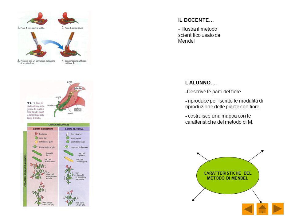 IL DOCENTE… - Illustra il metodo scientifico usato da Mendel L'ALUNNO…. -Descrive le parti del fiore - riproduce per iscritto le modalità di riproduzi
