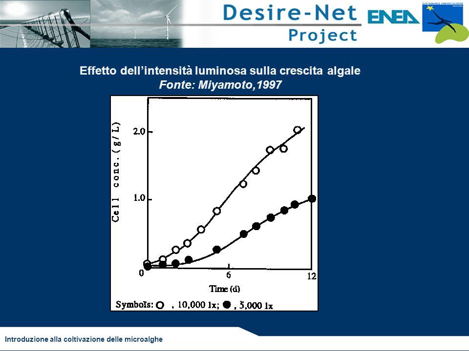 Introduzione alla coltivazione delle microalghe Effetto dell'intensità luminosa sulla crescita algale Fonte: Miyamoto,1997