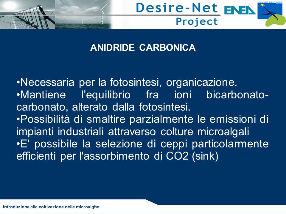 Necessaria per la fotosintesi, organicazione. Mantiene l'equilibrio fra ioni bicarbonato- carbonato, alterato dalla fotosintesi. Possibilità di smalti