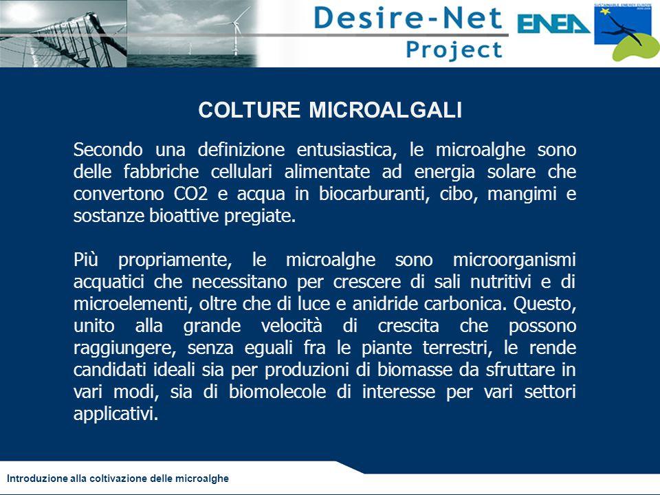 Introduzione alla coltivazione delle microalghe Schema a flussi per colture microalgali Fonte: Benemann, 2003