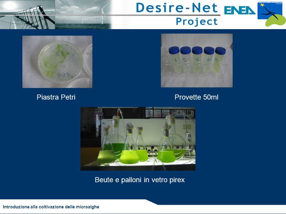 Introduzione alla coltivazione delle microalghe Piastra PetriProvette 50ml Beute e palloni in vetro pirex