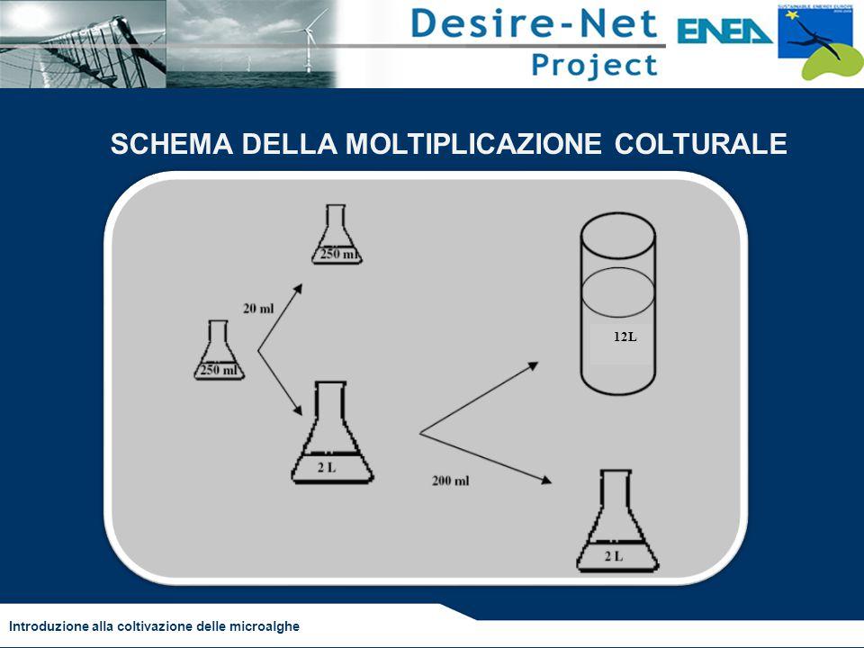 Introduzione alla coltivazione delle microalghe SCHEMA DELLA MOLTIPLICAZIONE COLTURALE 12L