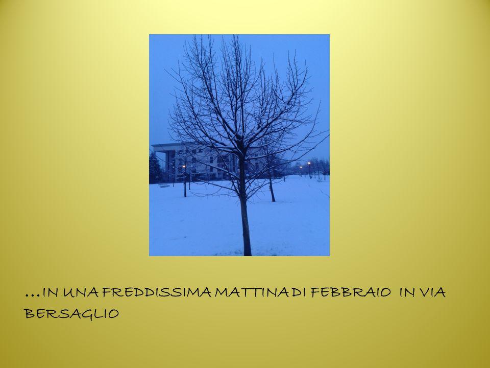 … IN UNA FREDDISSIMA MATTINA DI FEBBRAIO IN VIA BERSAGLIO